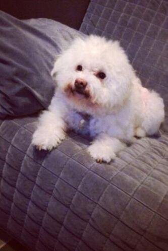 Este lunes 26 de agosto celebramos el Día del perro mostrando las fotos...
