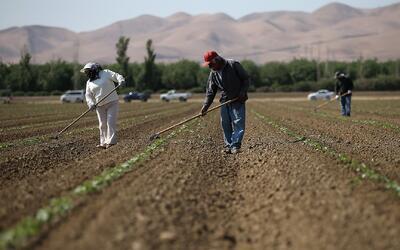 Políticas de Trump podrían dejar sin trabajadores al sector agricultor