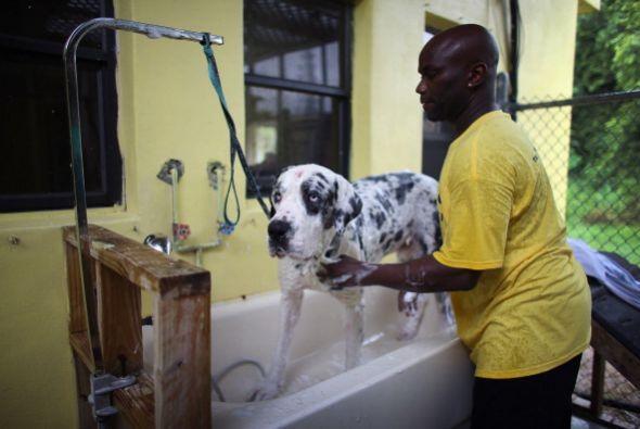 Adoptar en un centro de refugio te garantizará que tu nueva mascota ha s...