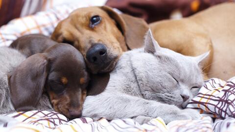 Estilista canino ayuda a perros abandonados a lucir mejor para ser adopt...