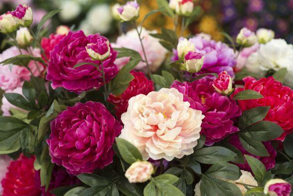 9) Ranúnculus. Estas flores de tallos largos son perfectas para darle un...