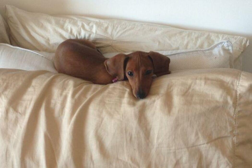 Sophie encontró un hotel de lujo en la casa de Vanessa en Miami.