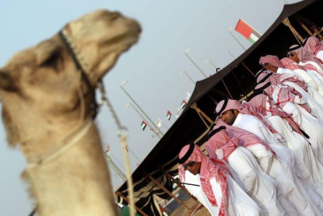 La pasión por los camélidos llevó en 2000 a un grupo de dueños de estos...