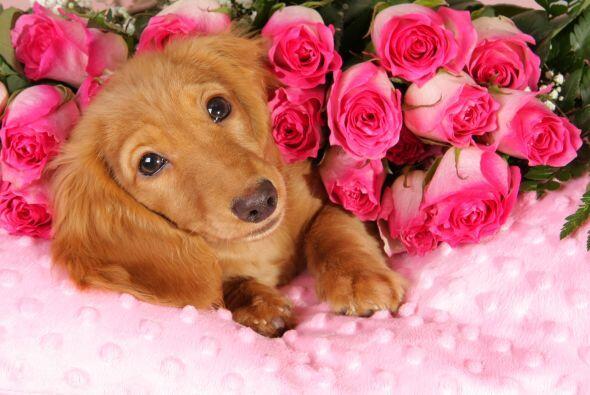 Recuerda que tu mascota no te exige ni rosas, ni chocolates, ni que derr...
