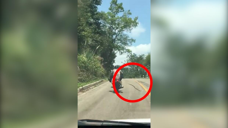 Una serpiente intenta atacar (pero no lo consigue) a un motociclista en...