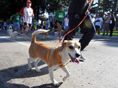 Más de mil perros participaron en una carrera de mascotas a benef...