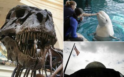 Museo Field, Planetario Adler y Acuario Shedd ser'an gratis el 29 de...