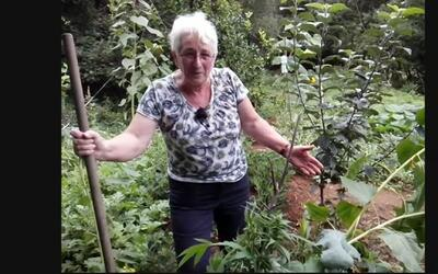 Esta señora plantó semillas que vinieron en la comida de loros y le crec...