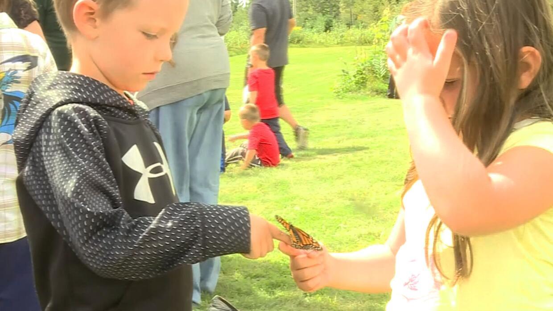 Mariposas son liberadas en Wisconsin para comenzar su viaje a México