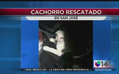 Rescatan a cachorrito de un desagüe en San José