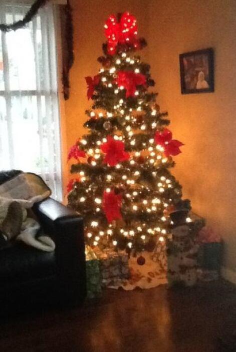 Decoraciones de navidad y celebraciones de nuestros televidentes.