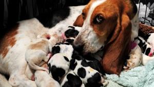 ¡Mami nueva! Dio a luz a 14 perritos