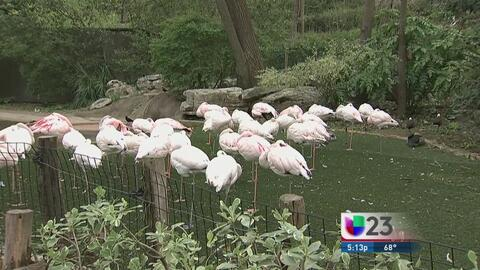 Mueren varias aves en zoológico de Fort Worth tras granizada