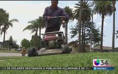 Operativo para atrapar a delincuentes que atacan a jardineros