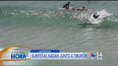 Tiburón navega desapercibido junto a múltiples surfistas