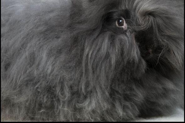 Ahora  tiene 20 conejos a los cuales regularmente les corta el pelo para...