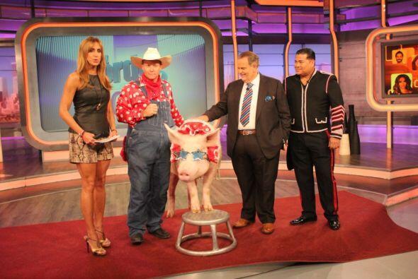 El cerdito pesa 500 libras.