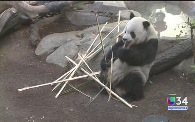Descubre los encantos del San Diego Zoo