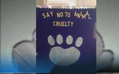 Luchan contra el maltrato de animales en Puerto Rico