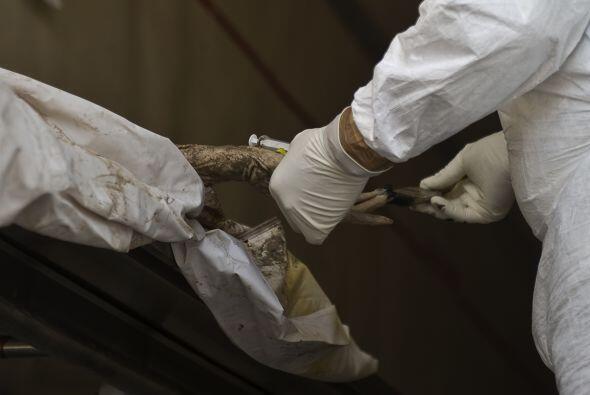 Los últimos cuerpos fueron encontrados en cinco tumbas clandestinas ubic...