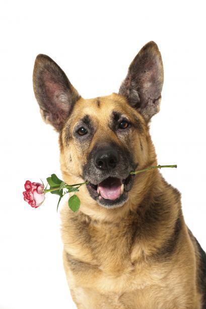 El 14 de febrero puede ser la cita perfecta para estar con tu mascota y...