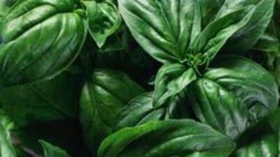 Plantas amazónicas ayudan prolongar y a mejorar la calidad de vida de lo...