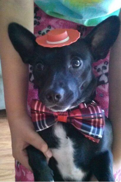 ¡Qué cute! @chaparritaolmos vistió de gala a su #MascotaAmorosa para que...