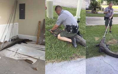 El feroz cocodrilo que quiso 'apoderarse' de un garaje en Louisiana
