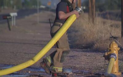 Rescatan a ocho gatos de una casa que se prendió en llamas