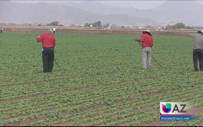 Aumentan número de visas H-2A en Arizona