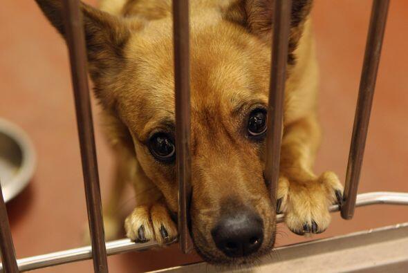 Cada día miles de perritos, por lo general adultos, son abandonados en l...