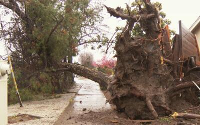 Fuertes vientos y lluvias causan afectaciones en vecindarios de San José