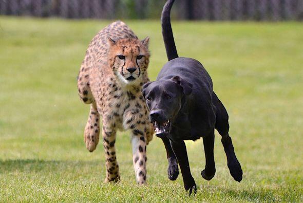 Pero aquí, la amistad y el compañerismo no conocen fronter...