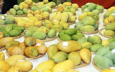 El mango está siendo una salvación para muchos en Venezuela