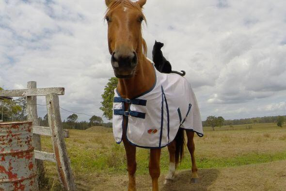 Ellos son Champy un caballo de sangre caliente y Morris un pequeño gato...