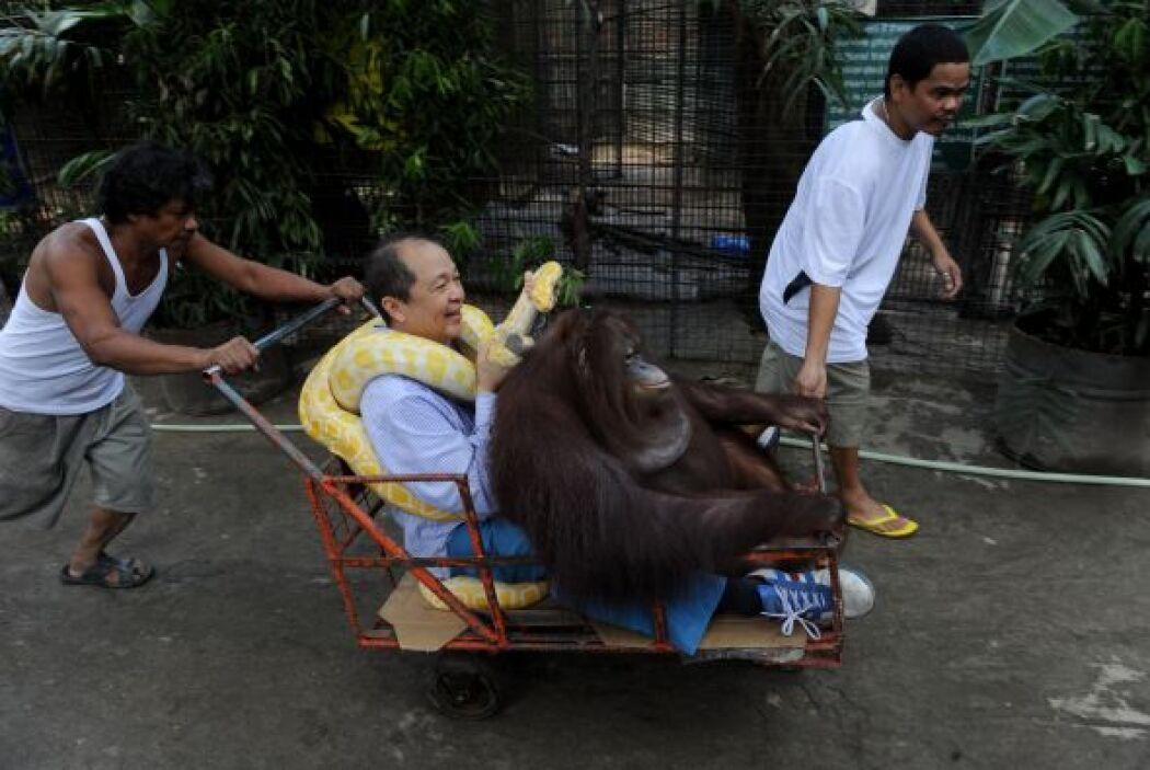 Manny Tiangco pasea a bordo de un carrito, con un orangután y un pitón a...
