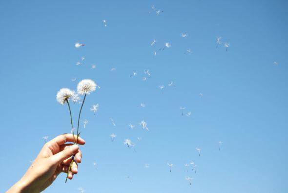 Tus flores son la orquídea, el gladiolo y el narciso, el diente d...