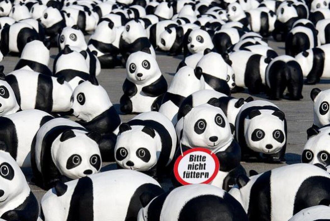 """""""Por favor no los alimente"""", dice el cartel colocado en la plaza de Berl..."""