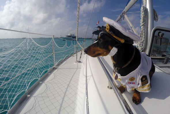 Ryan Beauchesne, de 26 años, decidió darle a su perro llamado 'Capitán C...