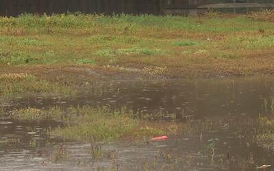 Aumenta la presencia de mosquitos en California debido a las lluvias