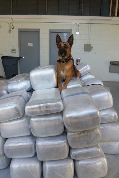 """""""Deputy Mike"""" de la unidad canina del Condado Fort Bend ayudó a o..."""