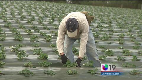 Aprueban pago extra a trabajadores del campo