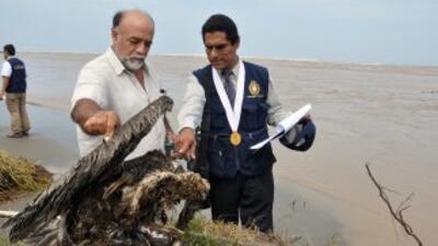 Alerta por la muerte masiva de pelícanos y delfines en las playas de Perú.