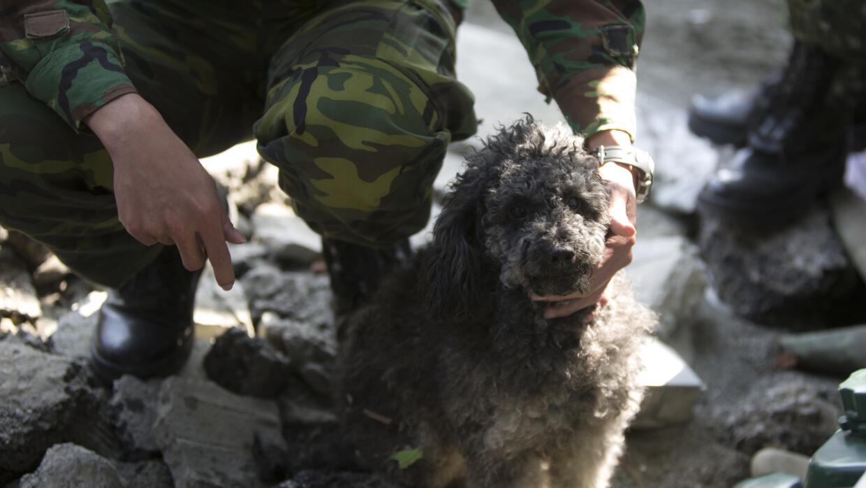 Un soldado cuida a un perrito, cuyo dueño murió en el terremoto