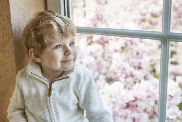 1. Mantén el aire limpio, sobre todo cuida que tus ventanas perma...