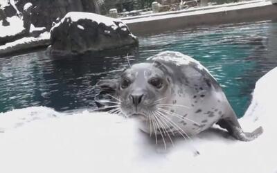 En video: estos animales jugando en la nieve calentarán tu día