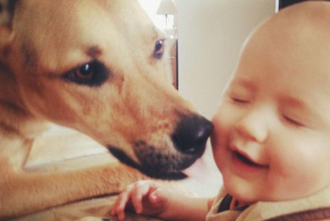Cuando el bebé llegó, Toby comenzó a cuidarlo y mimarlo igual que sus pr...