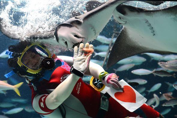 Incluso en un acuario de Tokio, los buzos aprovechan para disfrazarse de...