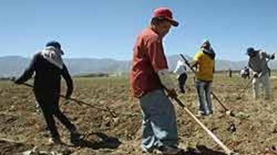 Campaña para reclutar ciudadanos en labores agrícolas que hacen indocume...