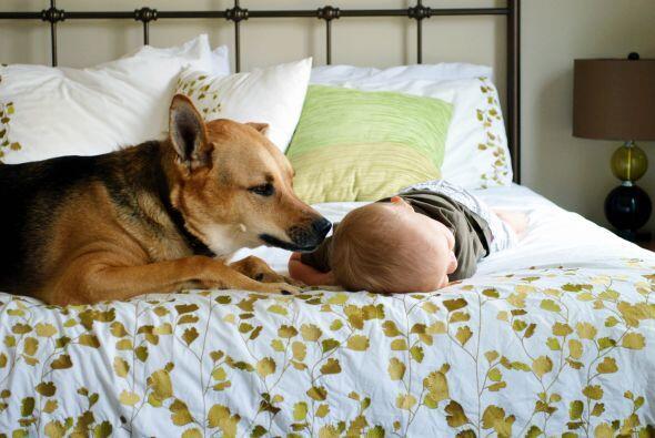 Toby es un perro de rescate y mascota de esta familia, nunca se perdi&oa...